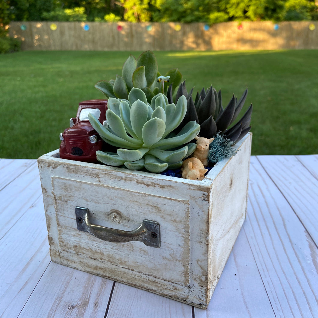 Farm Drawer Terrarium