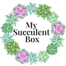 Load image into Gallery viewer, 4 pack of Succulents Monthly Subscription