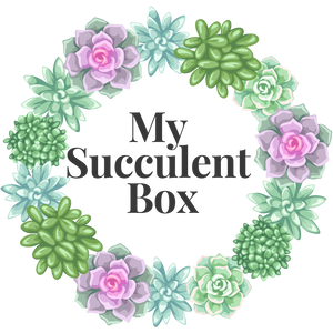 2 pack of Succulents Monthly Subscription