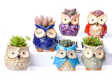 Load image into Gallery viewer, Plant Buddies (Owls) - 6 Pack with succulents! SAVE $