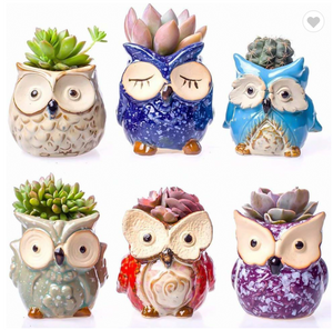 Plant Buddies (Owls) - 6 Pack with succulents! SAVE $