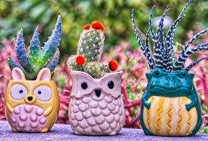 Plant Buddies (Barnyard Animals) - 6 Pack with succulents! SAVE $