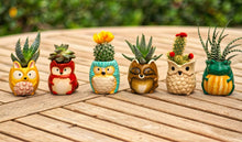 Load image into Gallery viewer, Plant Buddies (Barnyard Animals) - 6 Pack with succulents! SAVE $