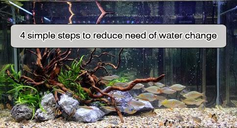 4 SIMPLE STEPS TO REDUCE THE NEED OF WATER CHANGE FOR YOUR AQUARIUM - East Ocean Aquatic