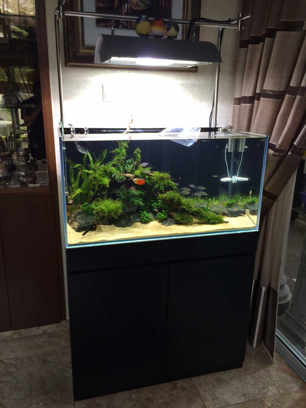 SETTING UP A 3FT PLANTED AQUARIUM FOR OUR CUSTOMER (PART 2) - East Ocean Aquatic