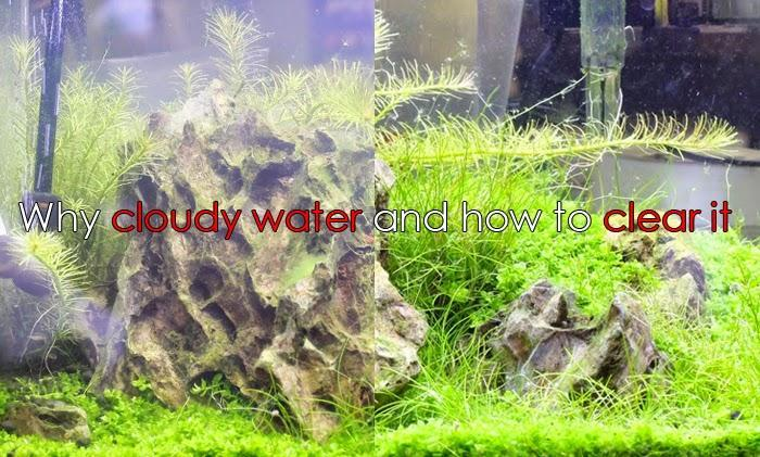 WHY DO I HAVE CLOUDY WATER AND HOW DO I SOLVE IT - East Ocean Aquatic
