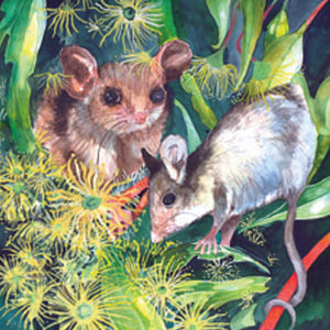 Gift Card - Blossom Possums