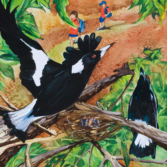 Greeting Card - A Magpie Lark