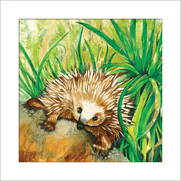 Greeting Card - Echidna