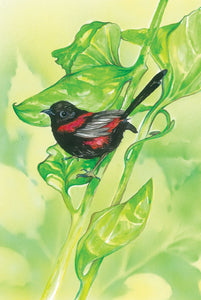Greeting Card - Red-backed Fairy-wren