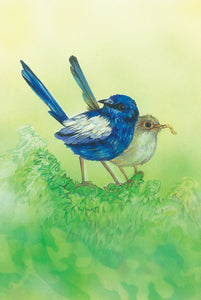 Greeting Card - White-winged Fairy-wren