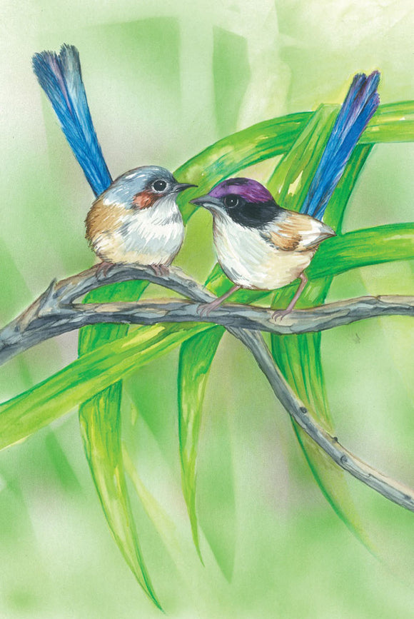 Greeting Card - Purple-crowned Fairy-wren