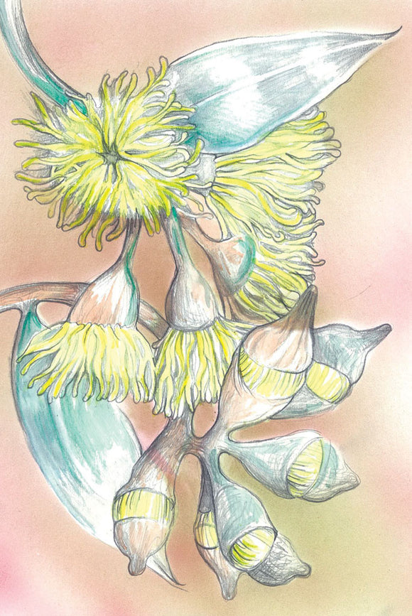 Greeting Card - Eucalyptus Blossom