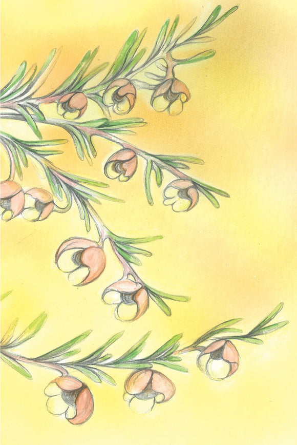 Greeting Card - Brown Boronia