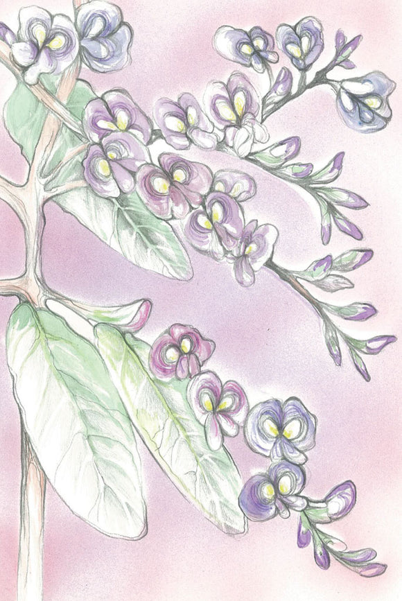 Greeting Card - Hardenbergia