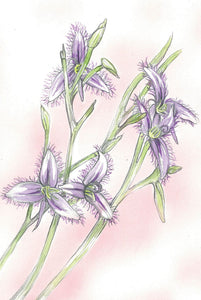 Greeting Card - Purple Fringe Lily
