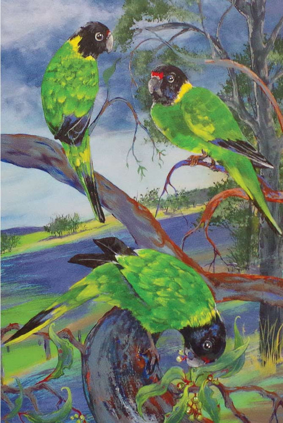 Greeting Card - Australian Ringneck Parrots