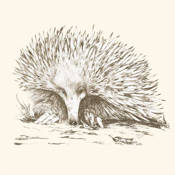 Greeting Card - Short Beaked Echidna