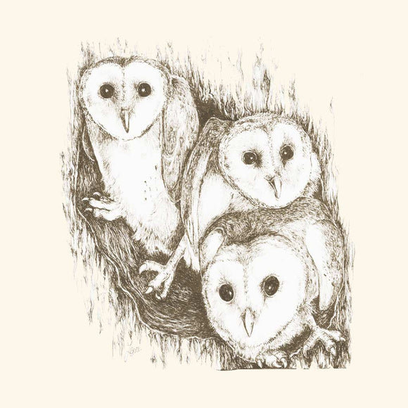 Greeting Card - Baby Barn Owls