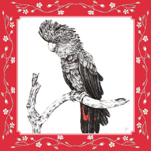 Greeting Card - Red Tailed Black Cockatoo