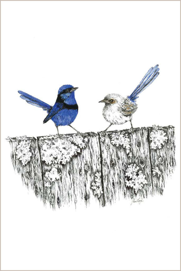 Greeting Card - Splendid Fairy Wren