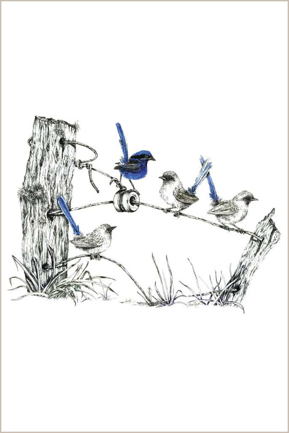 Greeting Card - Fairy Wren Family