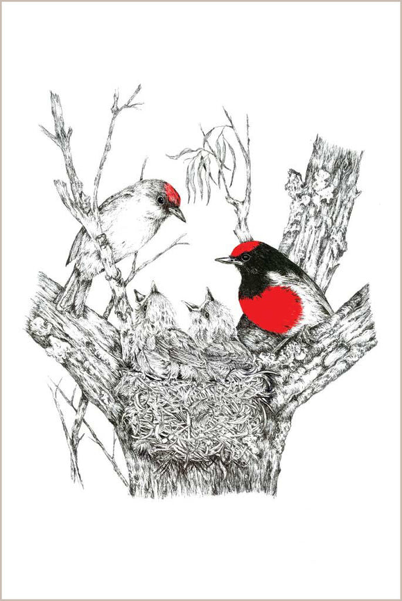 Greeting Card - Red-capped Robin