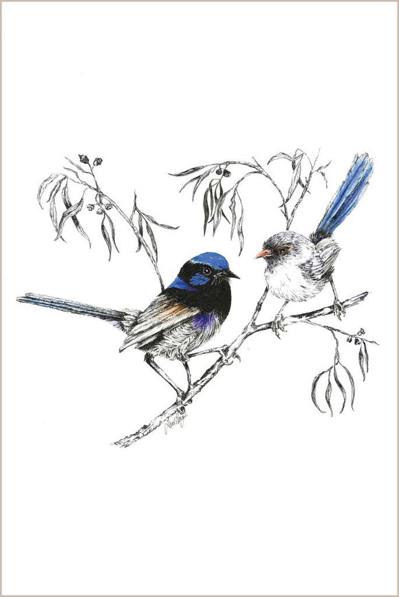 Greeting Card - Variegated Fairy Wren