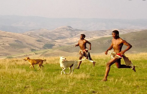 Persistence hunting is still used by the San people in the Kalahari Desert