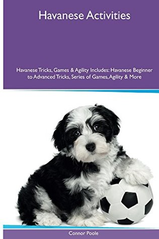 Havanese Activities - Connor Poole