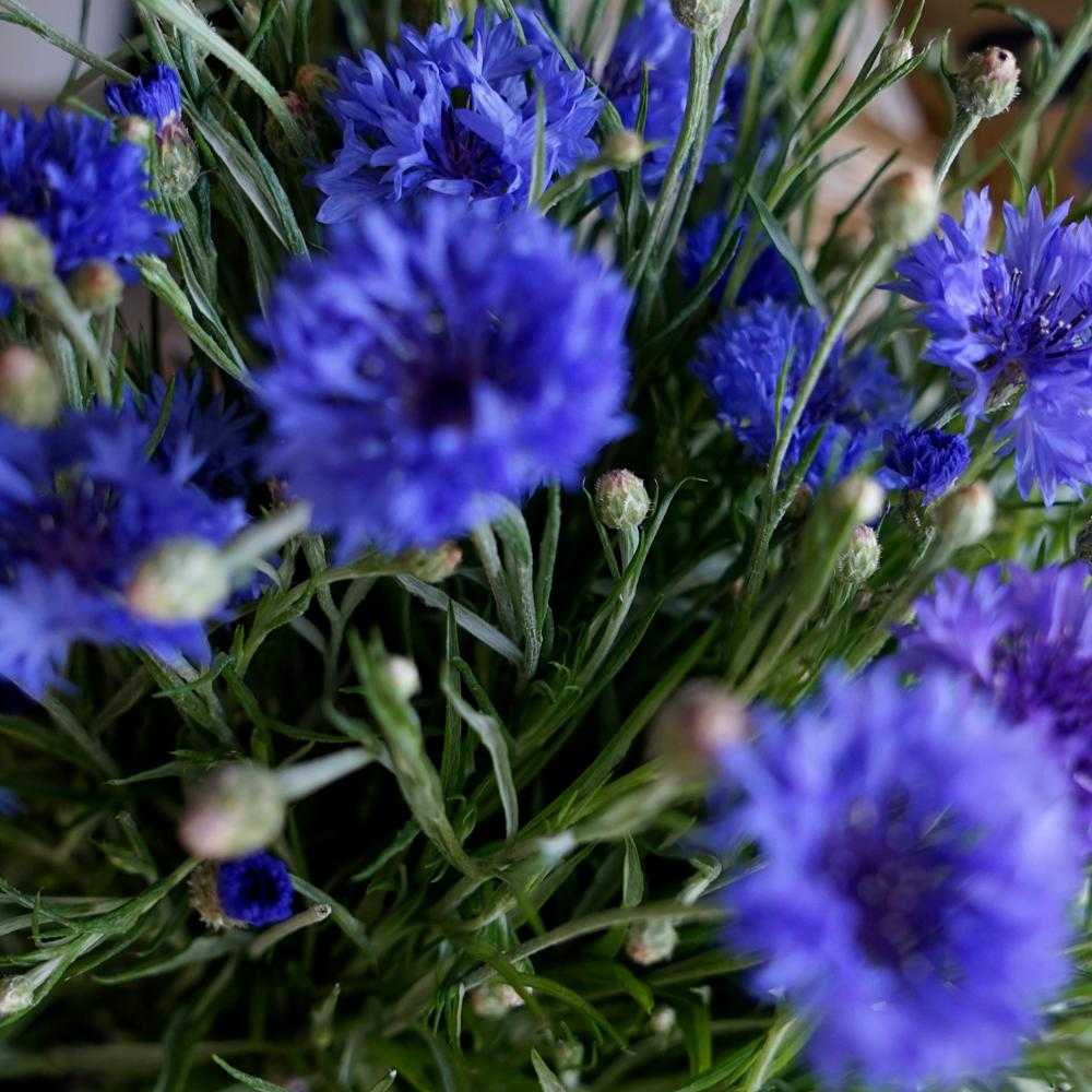 Bespoke Flower Bouquet - The Cove
