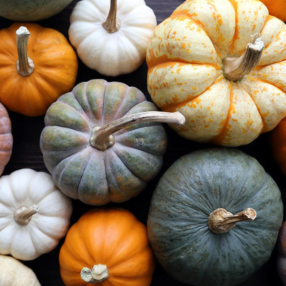 Floral Pumpkin Workshop (£75 per person) – 2.5 hours - The Cove