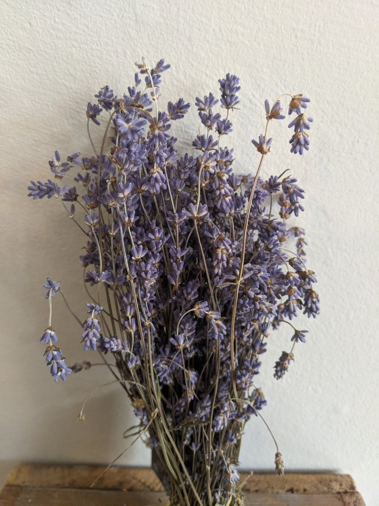 Lavender Bunch - The Cove