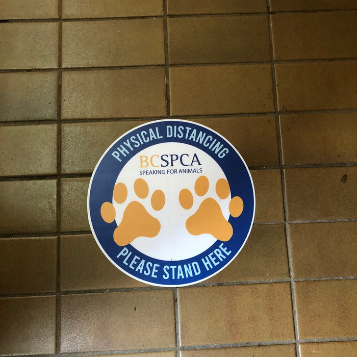 Custom floor decals for the BCSPCA designed, printed and installed by Blast Media Print