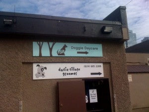 Davie Village Groomer gets NOTICED…
