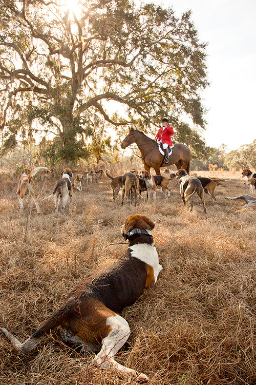 Fox Hunt, South Carolina