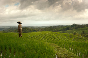 Days End at the Rice Terrace, Bali, Indonesia, 2013