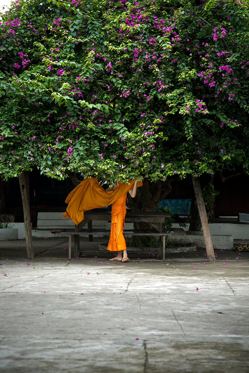 Under the Bougainvillea, Luang Prabang, Laos, 2013