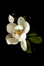 Load image into Gallery viewer, Custom Frame Magnolia No. 2, 2020