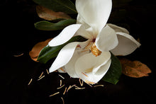 Load image into Gallery viewer, Custom Frame Magnolia No. 3, 2020