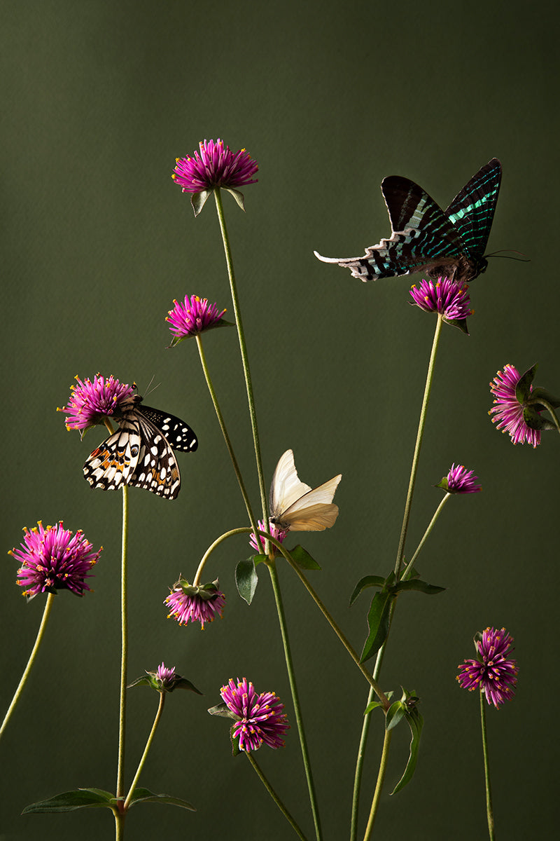 Wild flowers and Butterflies, 2020