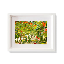 Load image into Gallery viewer, Custom Frame Cherry Harvest, Provence, France, 2016