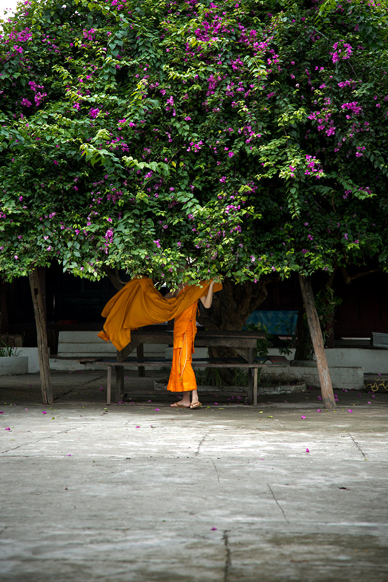 Custom Frame Under the Bougainvillea, Luang Prabang, Laos, 2013
