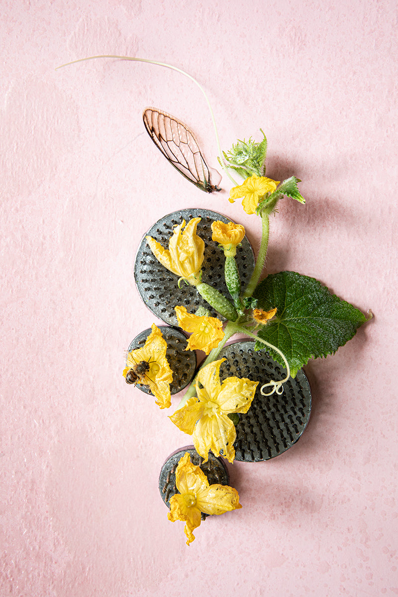 Cucumber Blossom with Cicada and Bee, 2020