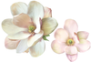 Magnolia Decals Flower Wall Decals, Eco-Friendly, Reusable Flower Wall Stickers - Wall Dressed Up