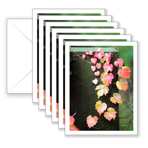 Autumn Cascade Boxed Notecard Collection