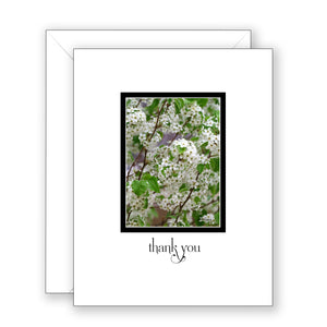 Bradbury Bradford Pear - Thank You Card
