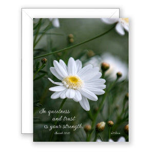 Daisy at Mission Ranch - Sympathy Card