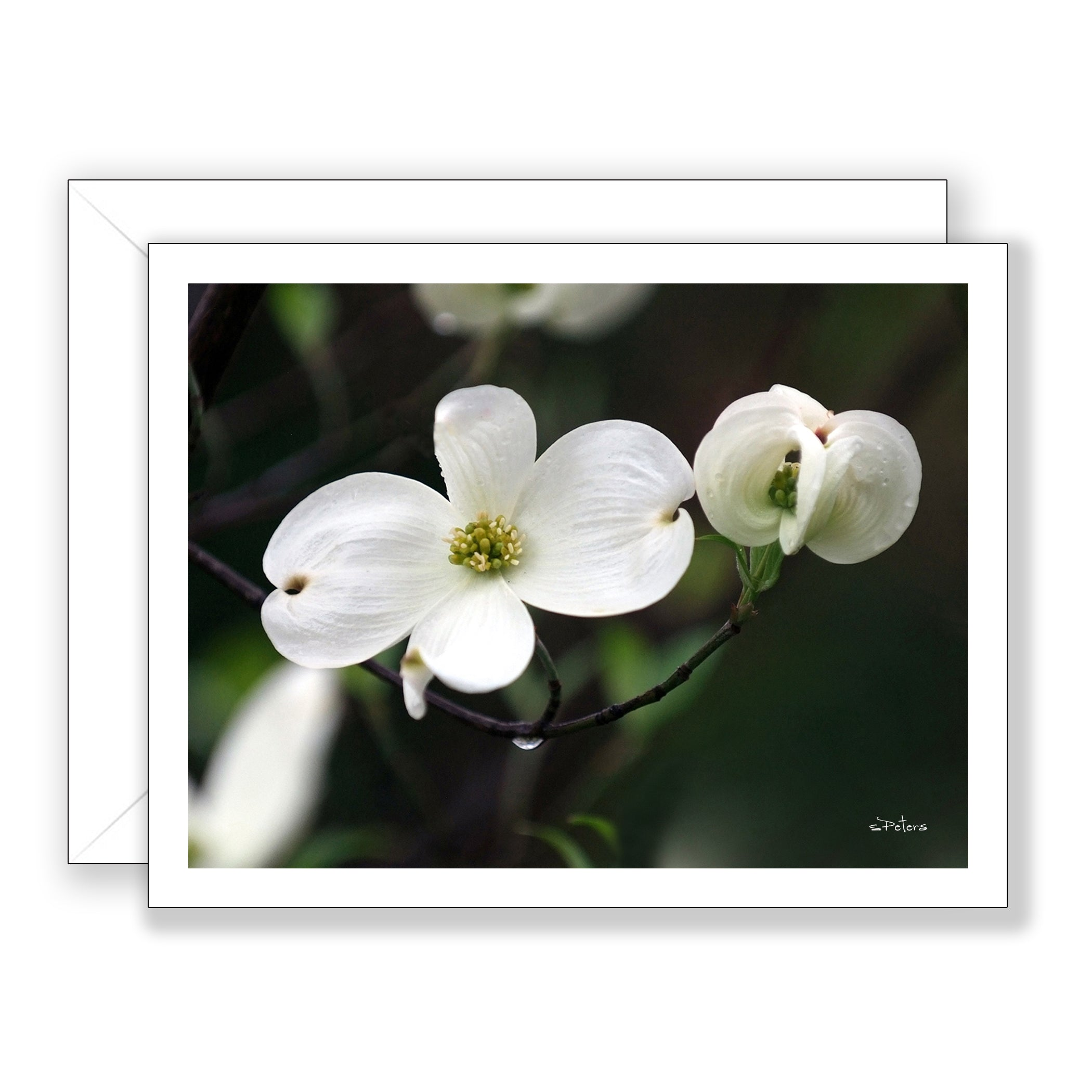 Delightful Dogwood Notecard