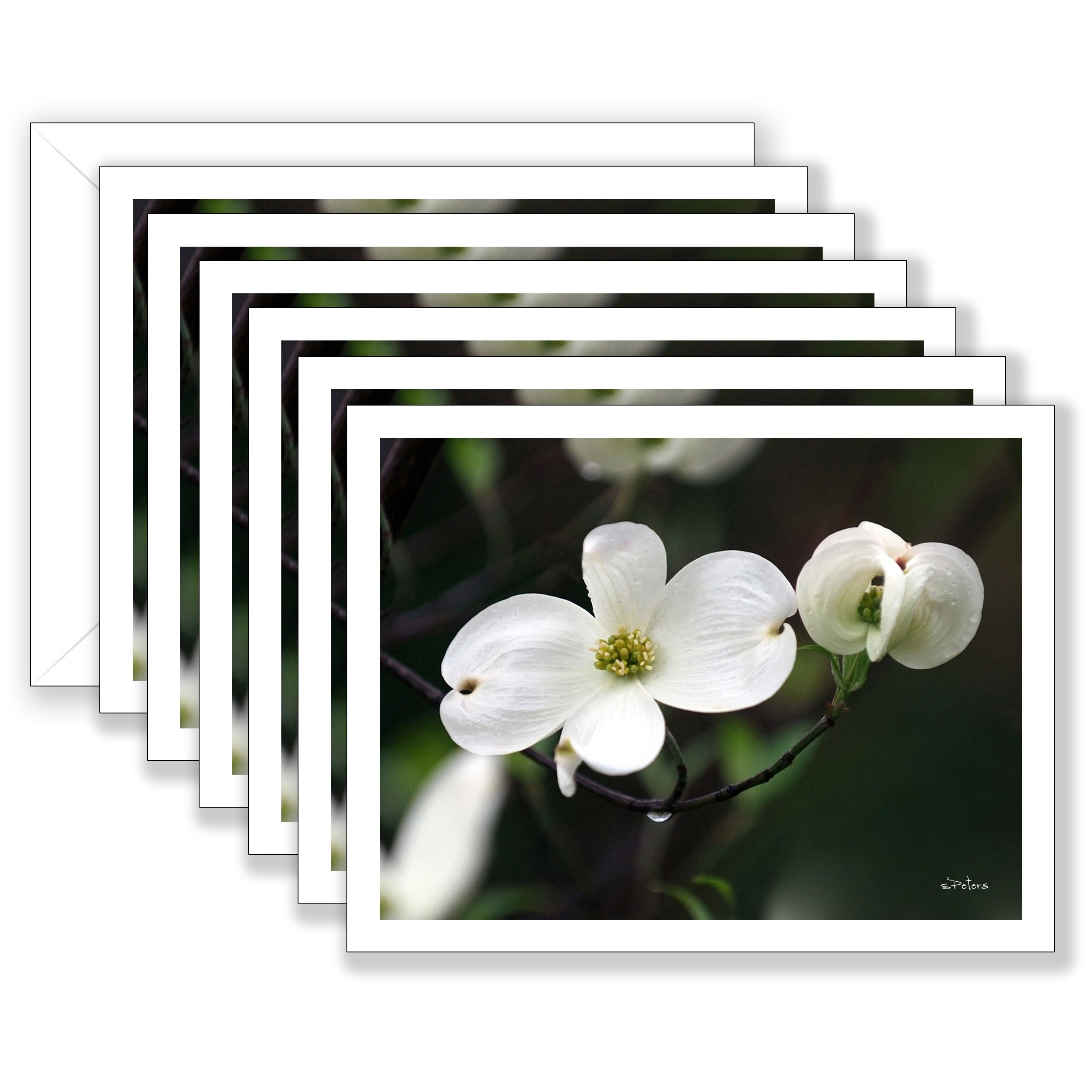 Delightful Dogwood Boxed Notecard Collection